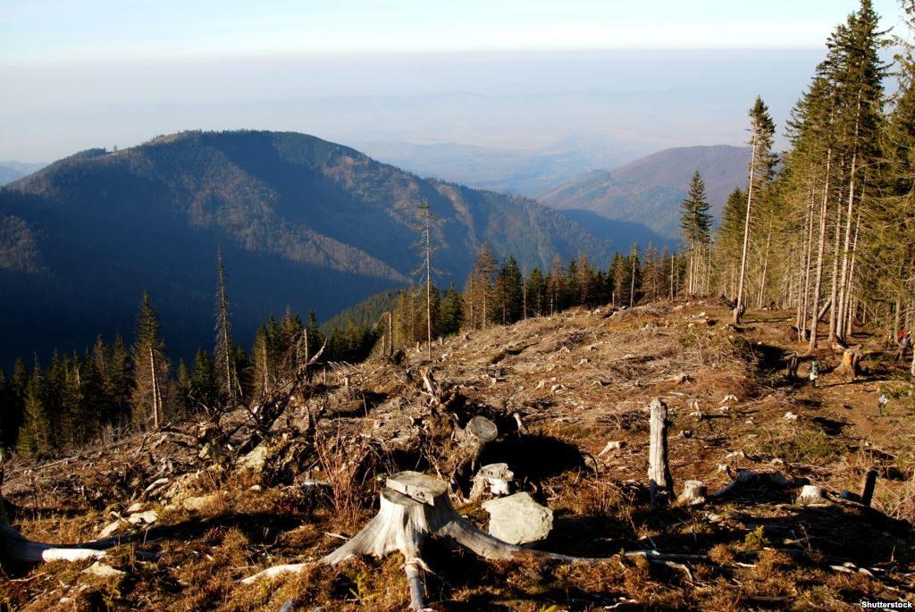 Українські нардепи посилили відповідальність за незаконну вирубку та контрабанду лісу