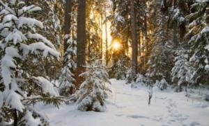 Синоптики прогнозують в Україні найтеплішу зиму за останні 30 років