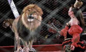 Зоозахисники домоглись того, що в Україні можуть ввести адмін відповідальність за використання диких тварин у цирках