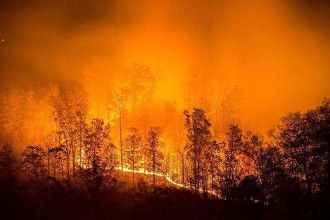 Російський уряд прийняв рішення не гасити пожежу у Сибірі, що вже охопила 3 мільйони гектарів