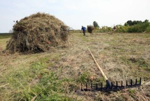 В Україні запрацював сайт, присвячений земельній реформі
