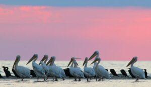 Кабмін схвалив Морську природоохоронну стратегію